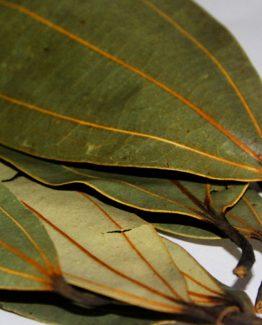Bay Leaf/ Tej Patta